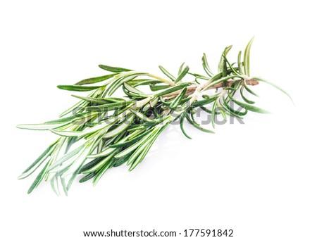 rosemary leaf isolated on white background - stock photo