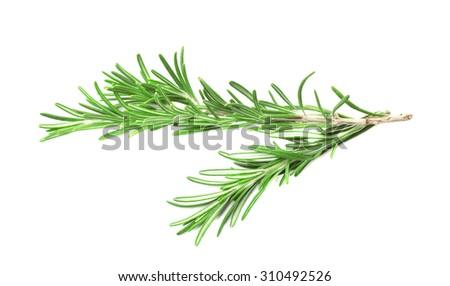 Rosemary sprig - stock photo