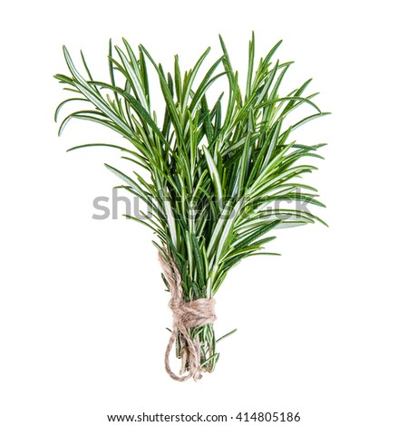 Rosemary sprigs tied in bundle isolated on white background, fresh organic herbs, healthy life, healthy food, nutrition - stock photo