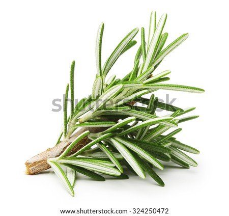 Rosemary twig isolated on a white background - stock photo