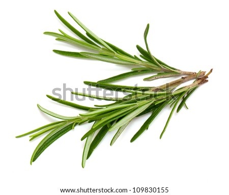 rosemary twigs isolated on white