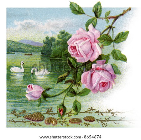 Roses and swans - a 1917 vintage greeting card illustration - stock photo