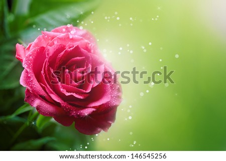 Roses Art Design. Invitation Card - stock photo