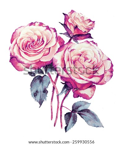 Roses bouquet watercolor  drawing - stock photo