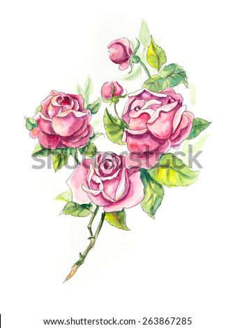 Roses brunch pattern roses wedding drawings stock illustration roses brunch pattern from roses wedding drawings water color painting greeting cards m4hsunfo