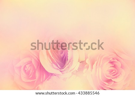 Roses in soft colors, Made with blur style for background - stock photo