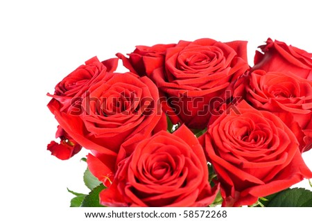 Roses isolated over white