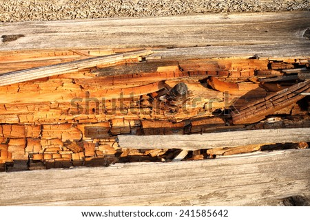 rot on dead wood, natural textured detail on spruce trunk - stock photo
