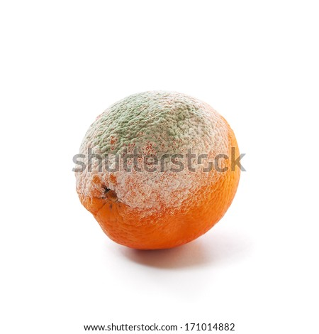 rotten and moldy orange - stock photo