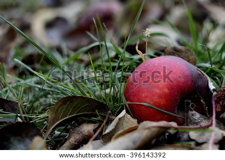 rotten apple in the grass - stock photo