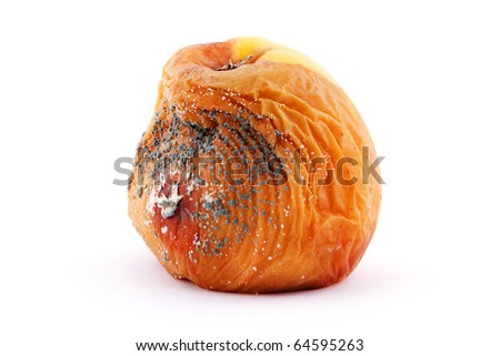 Rotten apple with a mold isolated on a white background - stock photo