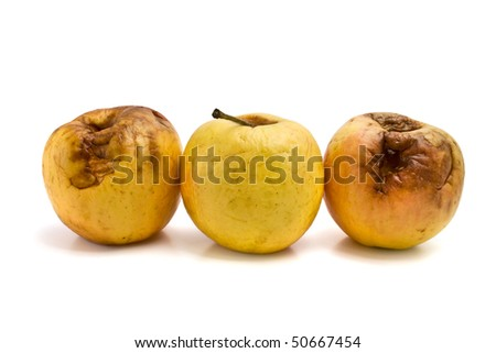 rotten apples isolated on white background - stock photo