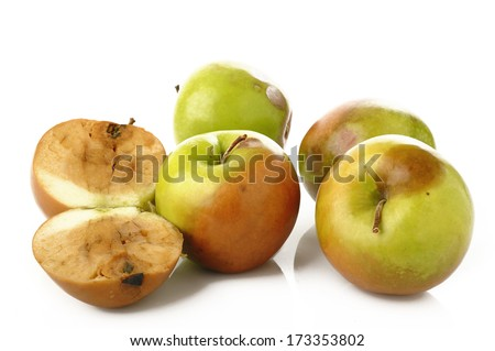 Rotten apples on white background - stock photo
