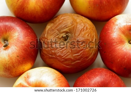 Rotten disgusting apple, many apple  - stock photo