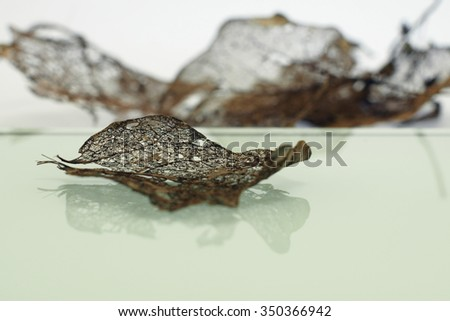 Rotten leaves with fibers - macro details