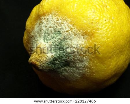 rotten lemon close up     - stock photo