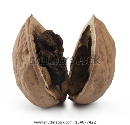 Rotten Nut. Isolated with clipping path - stock photo