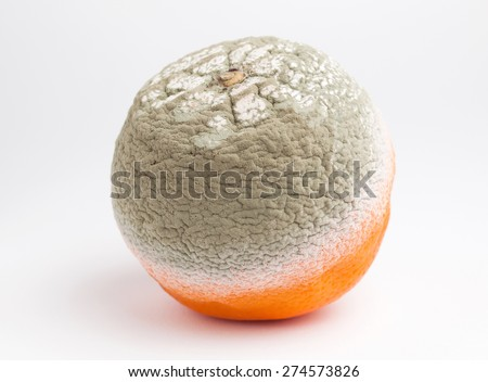 Rotten orange isolated on white background in a studio shot - stock photo