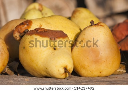 Rotten pears - stock photo