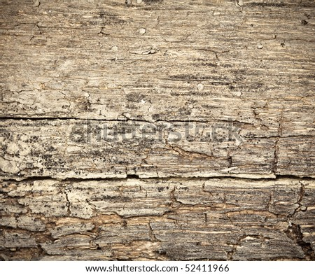 Rotting dry  wooden west background damaged by weather and parasites - stock photo