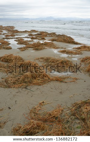 Rotting seaweed on the beach after a heavy storm - stock photo
