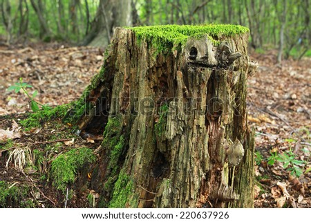 rotting tree trunk in forest - stock photo