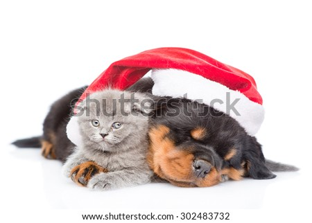 Rottweiler puppy and small kitten in red santa hat. isolated on white background - stock photo