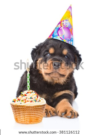 Rottweiler puppy in birthday hat with and cake. isolated on white background - stock photo