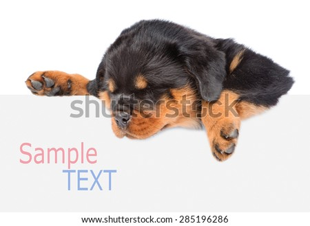 Rottweiler puppy peeking from behind empty board. isolated on white background - stock photo