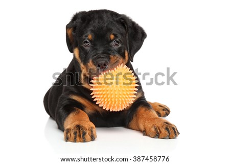 Rottweiler puppy playing with ball on white background - stock photo