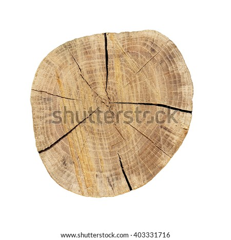 Rough oak circle cut isolated on white background.
