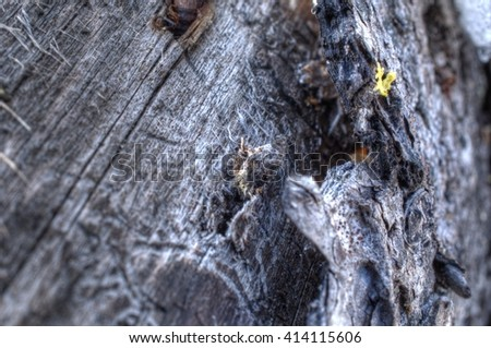 rough weathered tree log texture bark surface macro - stock photo