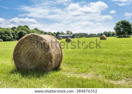 Round bales of hay freshly harvested in a field on a sunny blue sky day. - stock photo