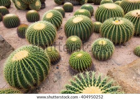 round cactus garden - stock photo