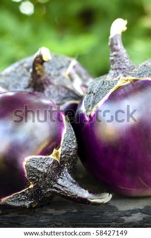 Round eggplants - stock photo