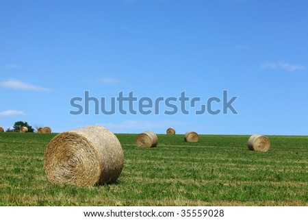 Round hay-bails in a field on a sunny summer day. - stock photo