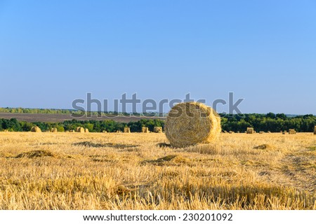 Round hay bales in a newly mowed agricultural field under a clear blue sunny sky, one bale in the foreground - stock photo