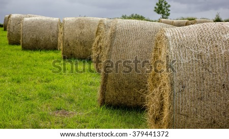 Round Hay Bales In Field. Agricultural Farming - stock photo