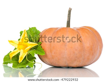Round orange pumpkin with straw hat isolated on white background cutout