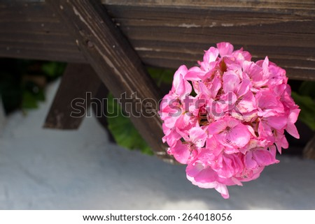 Round pink flower in wooden trellis