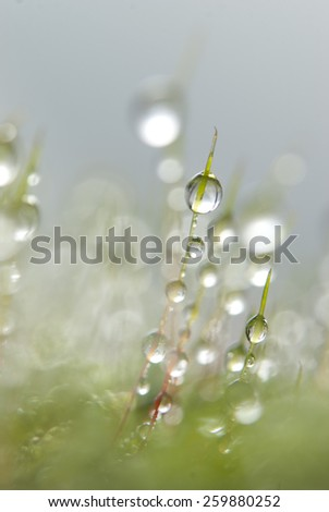 Round raindrops hanging at green moss