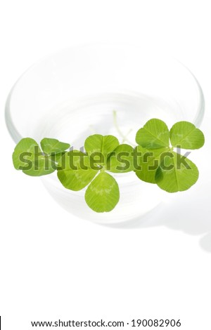 Rounded leaves grouped together in a clear bowl. - stock photo