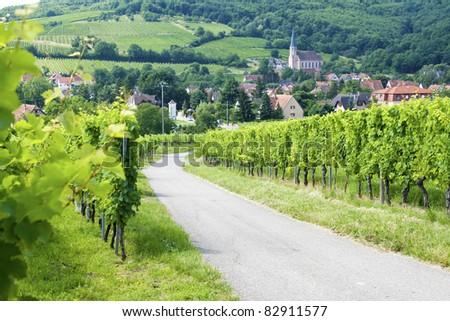 Route de vine. Alsace. France. - stock photo
