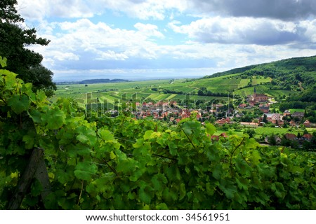 Route des vines in Alsace - France, village in Vosges Mountains. Vineyard. French country. - stock photo