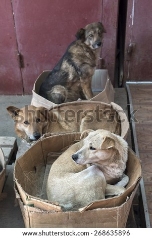 roving stray dogs sleeping in cardboard boxes - stock photo