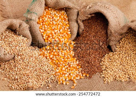 Row healthy grain food ( buckwheat, corn, flax and wheat) spilled out from jute sack.  - stock photo
