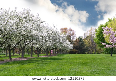 Row of Apple Trees against a Beautiful Sky - stock photo