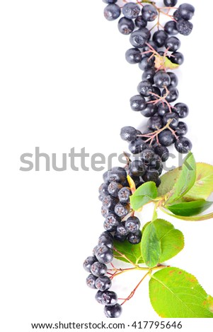 Row of aronia berries for border or frame isolated on white