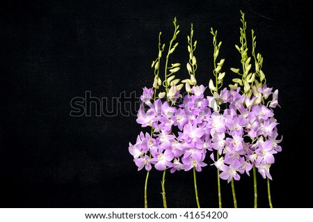 Row of Branch of violet orchid on black