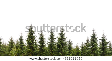 Row of Christmas pine trees isolated on a white background - stock photo